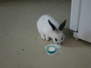 Baby Picture of 22 my rabbit